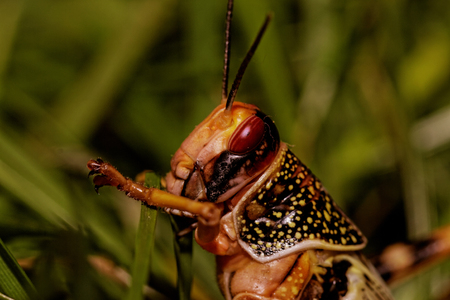 one locust eating the grass in the nature photo