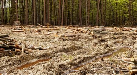 industriële ontbossing en houtkap