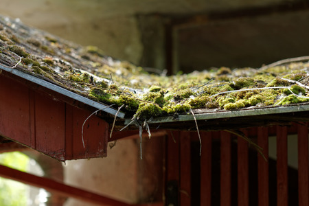 Close up photo of a mossy roof