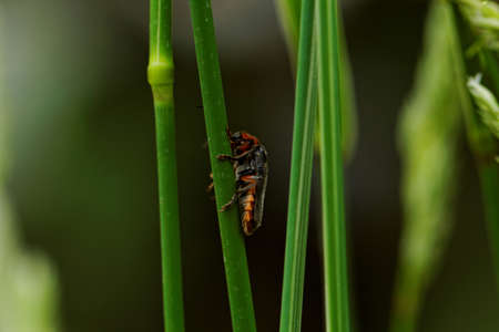 arable: A red bug on the green grass