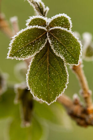 Beautiful close up photo of frosty plant