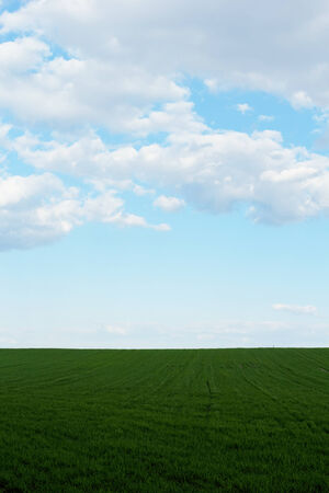 green wheat field under the blue cloudy sky Stock Photo