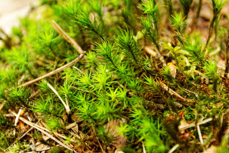 close-up picture about the green moss (macro) Stock Photo