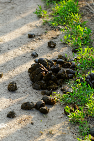 Photo of animal feces on the roadside