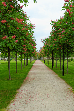 Photo of a chestnut alley in a beautiful garden