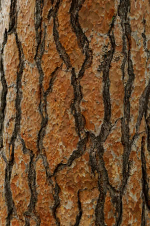 Photo of a long softwood pine trunk
