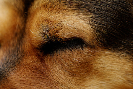 Close up photo of a rottweilers eye Stock Photo