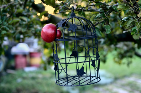 fled: Apple escapes from the Cage