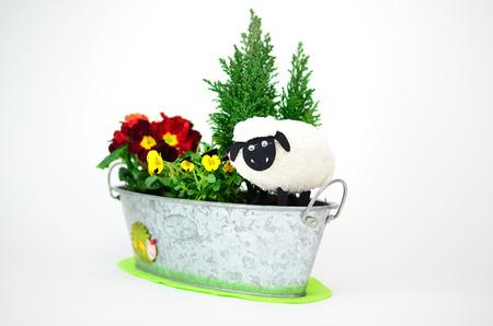 pasen schaap: Pasen lam in de Windowbox met de kleurrijke bloemen. De windowbox opgericht mijn vrouw. Stockfoto