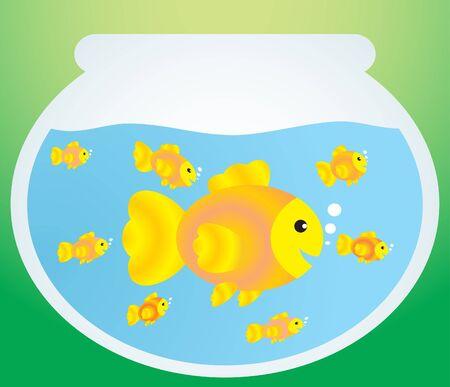 gold fish bowl: Gold fish  Illustration