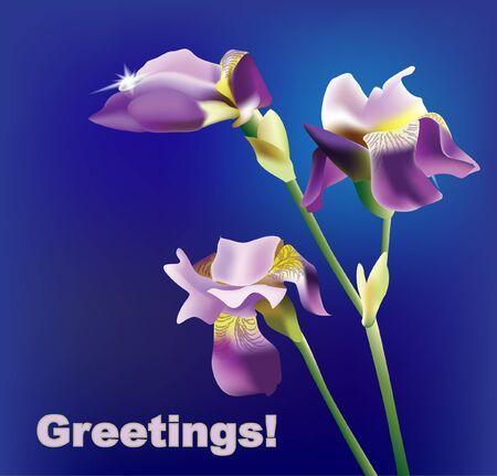 Lilac iris on a blue Stock Vector - 13915676