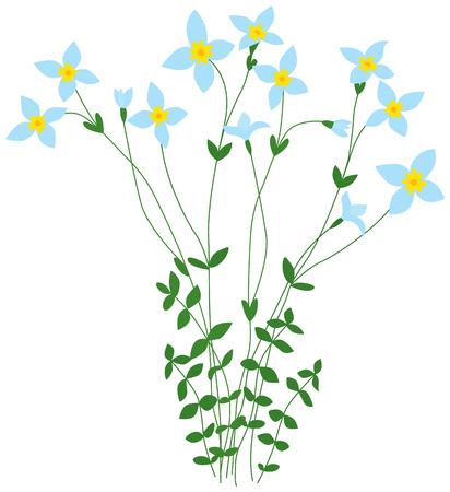 wild flowers: Illustrated bluet wild flowers bunch