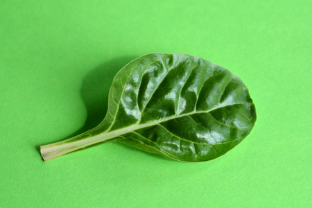 Small chard leaf on green paper background