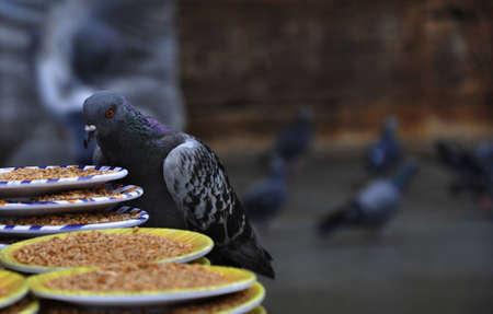새를 먹는 씨앗