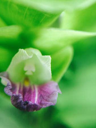 closeup: Closeup beautiful fresh flower