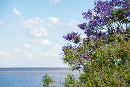 Beautiful blue sky with white clouds and Rio de La Plata horizon with vegetation in the foreground