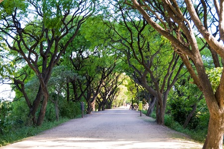 Dirt path in Puerto Mader ecological reserve, framed by trees Stock Photo
