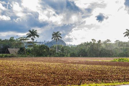 Vià ± ales vale vista em Cuba. Natureza irreal com lagos, montanhas, árvores, animais selvagens. Céu gorgeus.