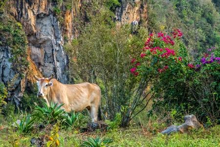 Vista do vale de Vi ales em Cuba. natureza irreal com lagos, montanhas, árvores, animais Foto de archivo