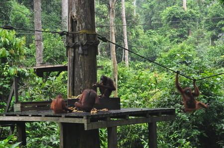 Mondeys having a meal Stock Photo