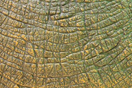 Dinosaurus Textuur van de Huid Stockfoto