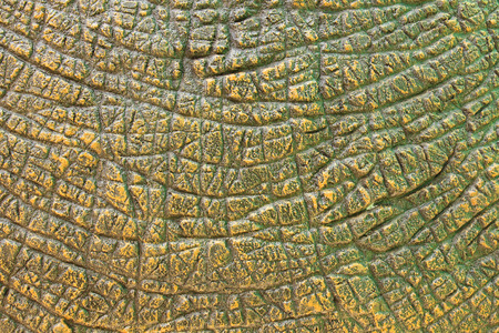 dinosauro: Texture Dinosaur Pelle