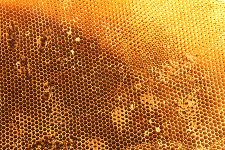 honingraat achtergrond