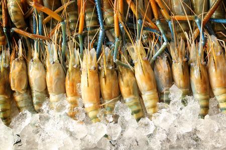 Fresh shrimps in market photo