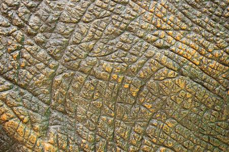 Skin texture rough plaster walls.