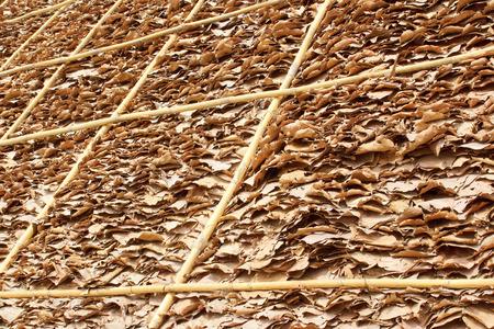 thatch: thatch background