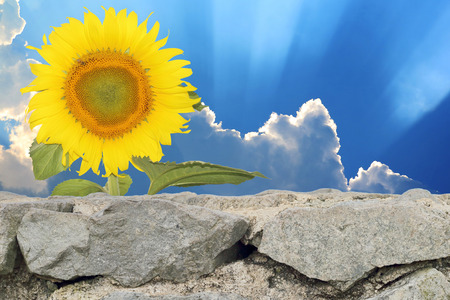 gothic build: The background of sky and stone walls with a sunflower. Stock Photo