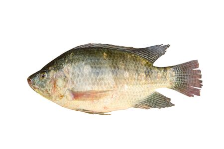 white nile: Nile tilapia fish isolated on white background
