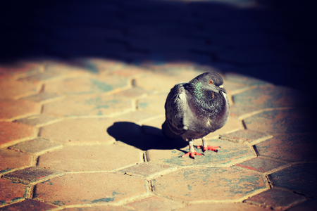 lonesome: Lonesome pigeon stand