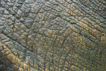 恐竜の肌の質感。