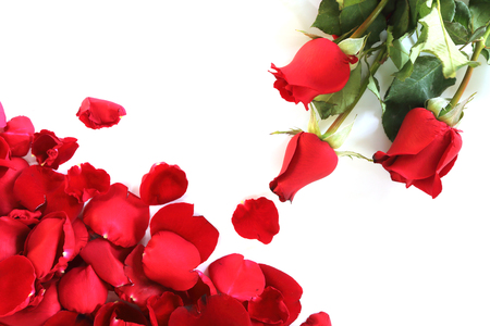 Rose petals and Red roses on white background Stockfoto