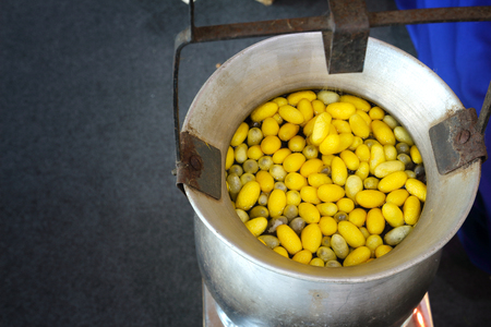 Making silk with silkworm cocoons by handmade. Boiling yellow silkworm cocoons to make silk thread. Stockfoto