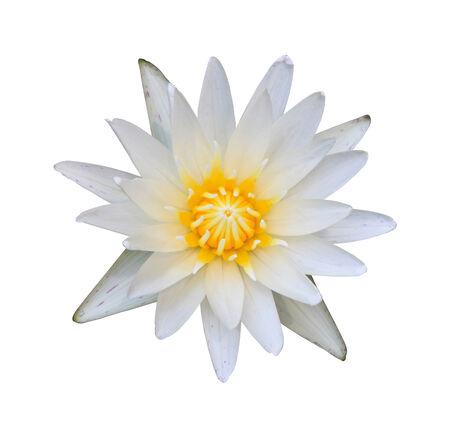 afbeelding van een lotusbloem op wit