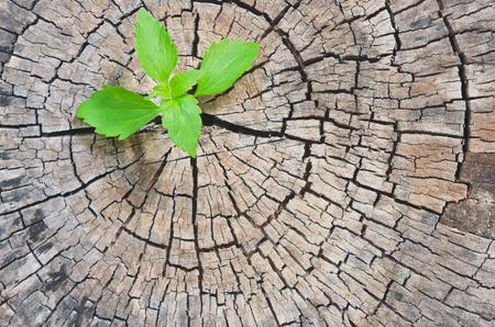 오래 삭감 나무 등 신흥 리더십 성공의 비즈니스 개념으로 신규 개발 및 리뉴얼 스톡 콘텐츠