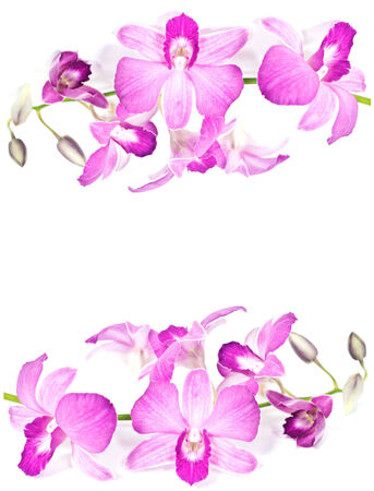 Orchid flowers, isolated on white background photo