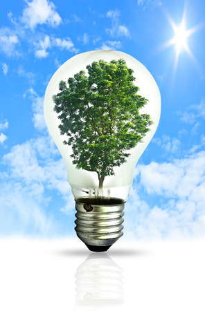 Light bulb with a tree growing. Environment, eco technology and energy concept. photo