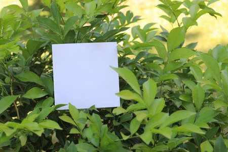 paper pin: Blank sheet of paper at the bark of tree.