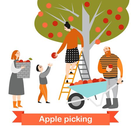 Happy family is picking apples in the garden. Harvest time. Children help their parents on the farm. Vector illustration on a white background