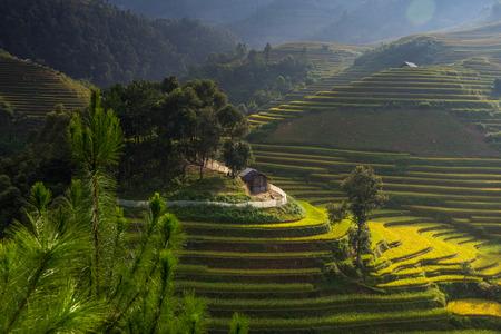Rice fields on terraced in sunset at Mu Cang Chai, Yen Bai, Vietnam. Rice fields prepare the harvest at Northwest Vietnam photo