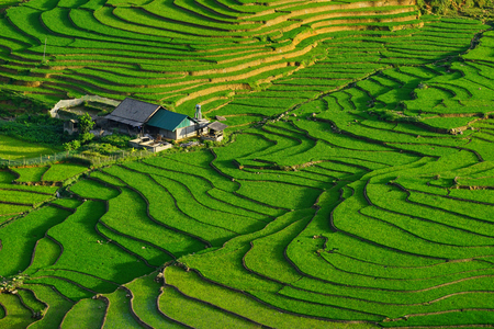 lao: Rice fields on terraced in rainny season at SAPA, Lao Cai, Vietnam. Rice fields prepare for transplant at Northwest Vietnam