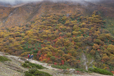 changing color: Autumn in EBC trekking route. Nepal. Changing color forest.