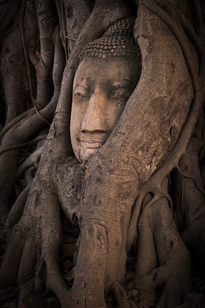 preferable: ancient buddhas head in tree roots