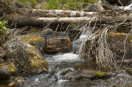 cheerless: Summer on the South Ural.Stream flow in forest.Tree cheerless on the stream.