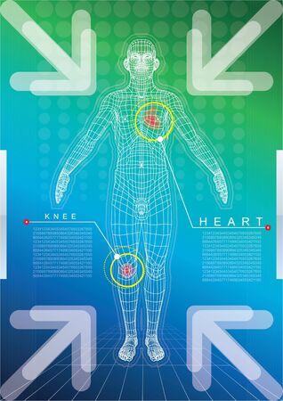 corpo umano: Wireframe del corpo umano