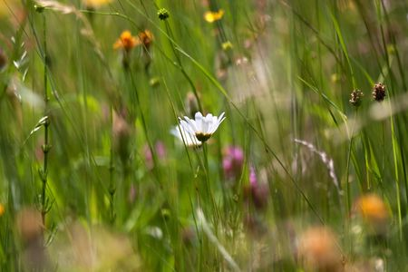 Meadows in Spring, with grass and different flowers Stock Photo - 5012171