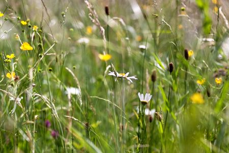 Meadows in Spring, with grass and different flowers Stock Photo - 5012172